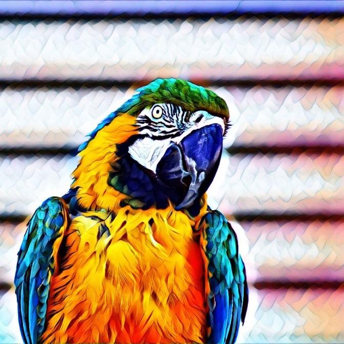 Bird Portrait (2)