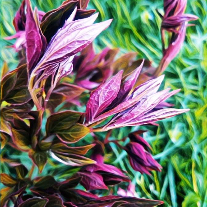 PurpleClaws